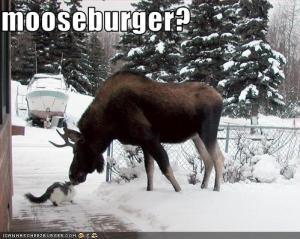 mooseburger